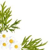 Priorità bassa della medicina di erbe Fotografia Stock