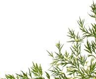 Priorità bassa della medicina di erbe Fotografie Stock Libere da Diritti