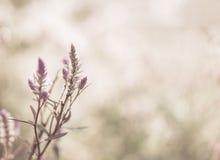 Priorità bassa della natura fotografia stock