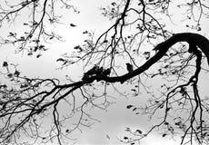 Priorità bassa della natura con gli uccelli e l'albero Fotografia Stock