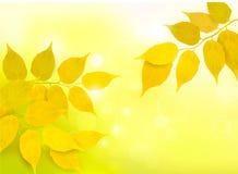 Priorità bassa della natura con i fogli di colore giallo di autunno illustrazione di stock