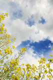 Priorità bassa della natura con le nubi ed il cielo Immagine Stock
