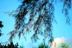 Priorità bassa della natura con lo spazio della copia Là ` con riferimento ad un mazzo di foglie disposte sul centro del telaio p Fotografia Stock