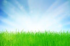 Priorità bassa della natura della sorgente con erba Fotografia Stock Libera da Diritti