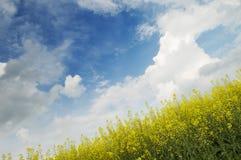 Priorità bassa della natura di agricoltura Fotografie Stock