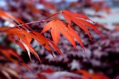 Priorità bassa della natura di autunno Fotografia Stock