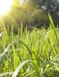 Priorità bassa della natura di stagione di estate Immagine Stock