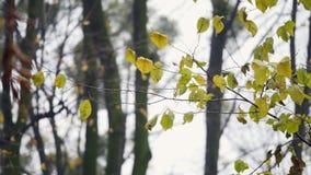 Priorità bassa della natura Il bello lustro di Sun con il salto sul giallo dell'albero del vento va Bokeh astratto vago con il so archivi video