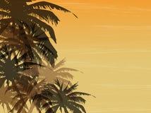 Priorità bassa della palma Immagini Stock Libere da Diritti