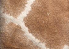 Priorità bassa della pelle della giraffa Fotografia Stock Libera da Diritti