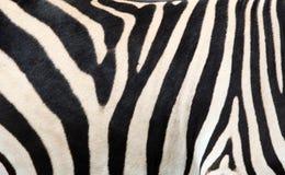 Priorità bassa della pelle della zebra Fotografia Stock Libera da Diritti