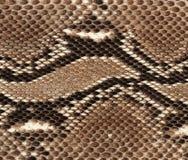 Priorità bassa della pelle di serpente Immagini Stock