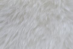Priorità bassa della pelliccia Fotografie Stock Libere da Diritti