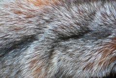 Priorità bassa della pelliccia Fotografia Stock