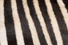 Priorità bassa della pelliccia della zebra Fotografie Stock