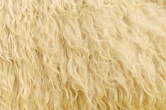 Priorità bassa della pelliccia delle pecore Fotografia Stock