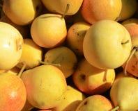 Priorità bassa della pera. Fotografia Stock Libera da Diritti