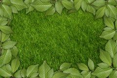 Priorità bassa della pianta verde Immagini Stock Libere da Diritti