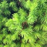 Priorità bassa della pianta verde fotografia stock