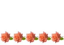 Priorità bassa della scheda delle rose di giorno di madri Immagine Stock