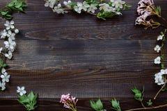 Priorità bassa della sorgente Bei fiori freschi e foglie sul corteggiare Immagine Stock