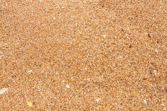 Priorità bassa della spiaggia di Sandy Immagine Stock