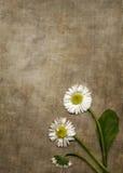Priorità bassa della tela di canapa con le margherite Immagine Stock Libera da Diritti