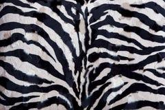 Priorità bassa della zebra Fotografie Stock Libere da Diritti