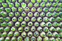Priorità bassa delle bottiglie di vetro verdi Immagini Stock