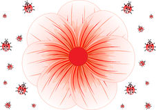 Priorità bassa delle coccinelle e di grande fiore rosso,   Fotografia Stock
