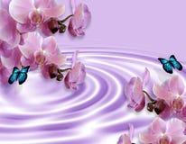 Priorità bassa delle farfalle e delle orchidee Fotografia Stock