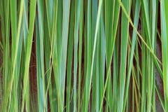 Priorità bassa delle foglie di palma Fotografie Stock