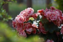 Priorità bassa delle piante e dei fiori Immagine Stock