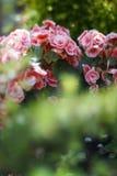 Priorità bassa delle piante e dei fiori Fotografie Stock