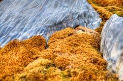 Priorità bassa delle rocce e del muschio Fotografia Stock Libera da Diritti
