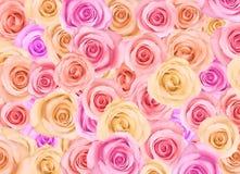 Priorità bassa delle rose Immagini Stock