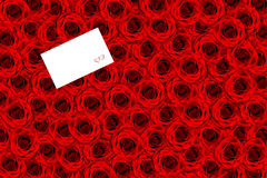 Priorità bassa delle rose Fotografia Stock