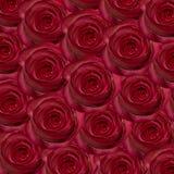 Priorità bassa delle rose Immagini Stock Libere da Diritti