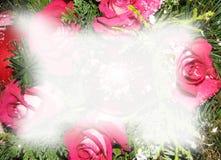 Priorità bassa delle rose di natale Fotografia Stock