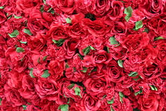Priorità bassa delle rose rosse Fotografia Stock Libera da Diritti
