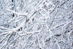 Priorità bassa dello Snowy Fotografia Stock Libera da Diritti