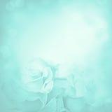 Priorità bassa dentellare con i fiori di rosa Immagini Stock