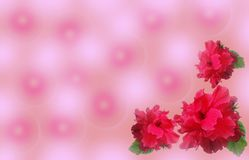 Priorità bassa dentellare con i fiori rossi Immagini Stock