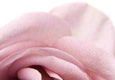 Priorità bassa dentellare della Rosa Immagini Stock Libere da Diritti