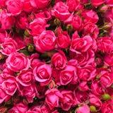 Priorità bassa dentellare delle rose Fotografia Stock