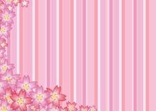 Priorità bassa dentellare di Sakura Immagine Stock