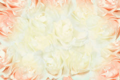 Priorità bassa dentellare e bianca delle rose Fotografia Stock