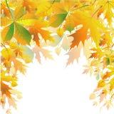 Priorità bassa di autunno Immagini Stock Libere da Diritti