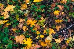Priorità bassa di autunno Asciughi le foglie sulla terra con un fondo vago Fotografie Stock Libere da Diritti