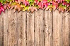 Priorità bassa di autunno con i fogli colorati Fotografie Stock Libere da Diritti